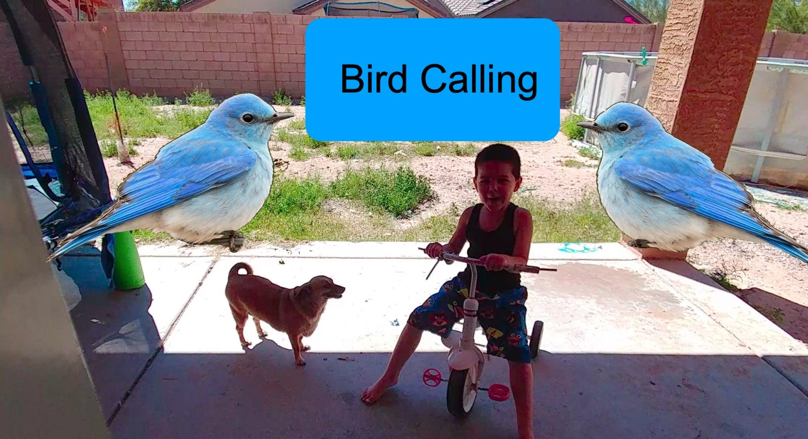 FUNNIEST TALKING BIRDS COMPILATION